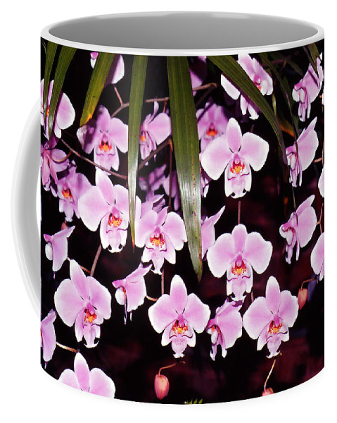 Flowers Coffee Mug featuring the photograph Pink Little Orchids by Susanne Van Hulst