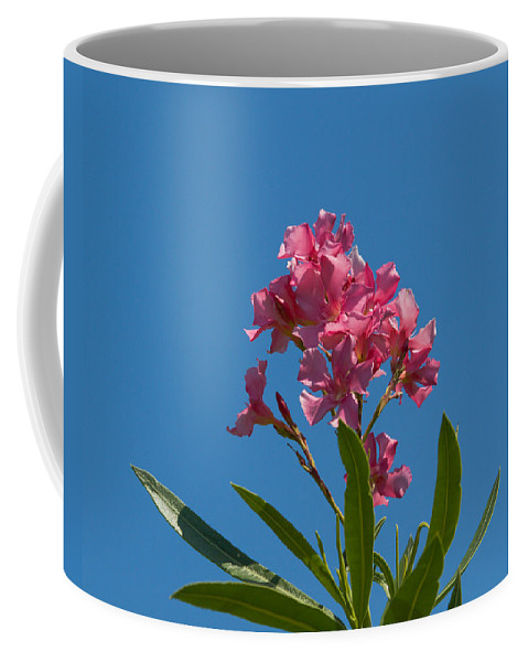 Florida; Indian; River; Melbourne; Nerium; Oleander; Red; Pink; Flower; Bush; Shrub; Poison; Poisono Coffee Mug featuring the photograph Pink Oleander Flower In Spring by Allan Hughes