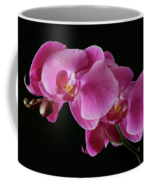 Orchids Coffee Mug featuring the photograph Pink Orchids by Bruce Beck
