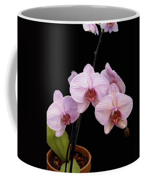 Flowers Coffee Mug featuring the photograph Pink Orchids by Kurt Van Wagner
