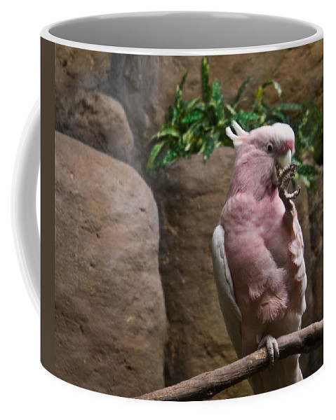 Pink Coffee Mug featuring the photograph Pink Parrot Nibbling Foot by Douglas Barnett
