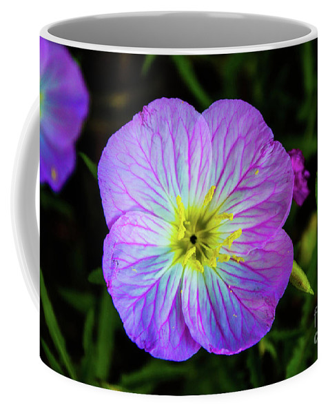 Primrose Coffee Mug featuring the photograph Pink Primrose by Kevin Gladwell