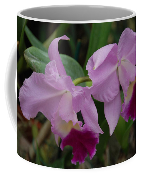 Macro Coffee Mug featuring the photograph Pink Purple Orchids by Rob Hans