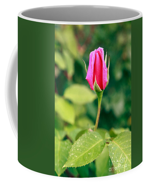 Rose Coffee Mug featuring the photograph Pink Rose Bud by Gaspar Avila