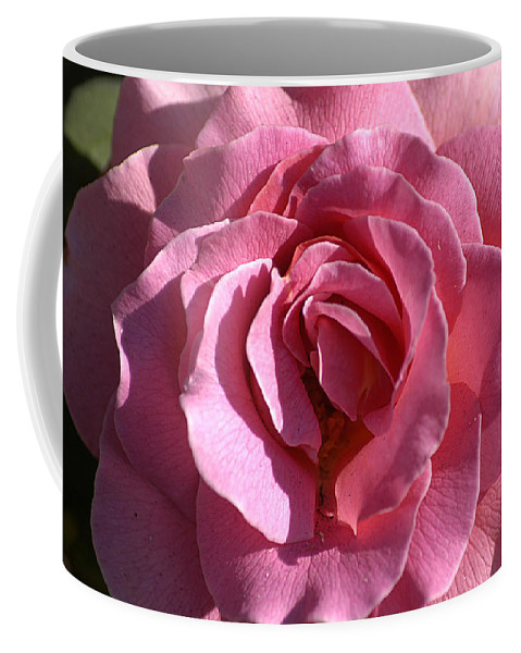 Clay Coffee Mug featuring the photograph Pink Rose by Clayton Bruster