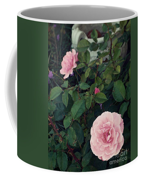 Three Pink Roses Bud Coffee Mug featuring the photograph Pink Rose by Thomas Dudas