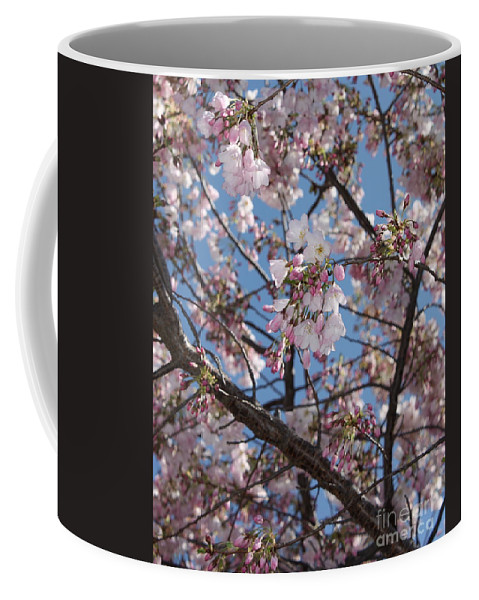 Spring Coffee Mug featuring the photograph Pink Spring Blossoms by Carol Groenen