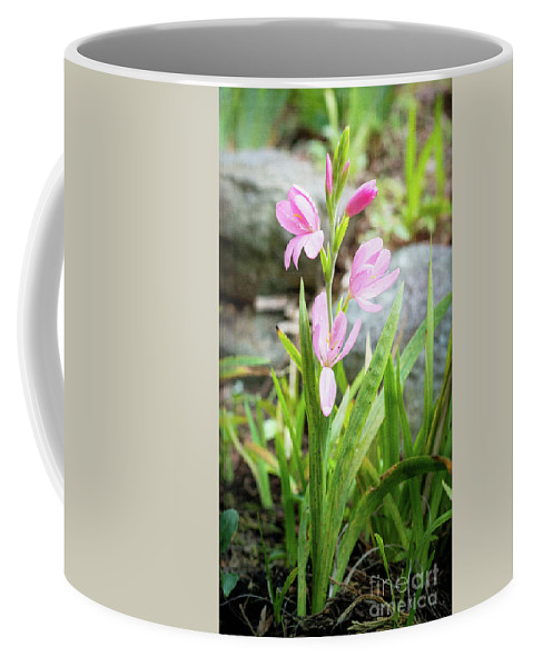 Flower Coffee Mug featuring the photograph Pink Spring Bulb by Ava Peterson