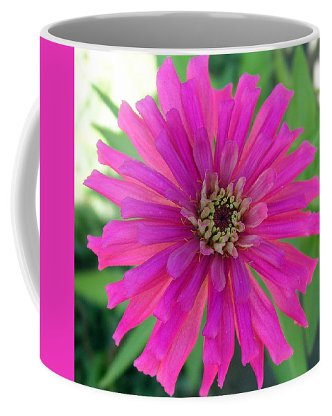 Zinnia; Flower; Pink; Translucent; Transparent; Florida; Petals; Garden; Zinnia; Agustifolia; Flower Coffee Mug featuring the photograph Pink Zinnia In Florida by Allan Hughes