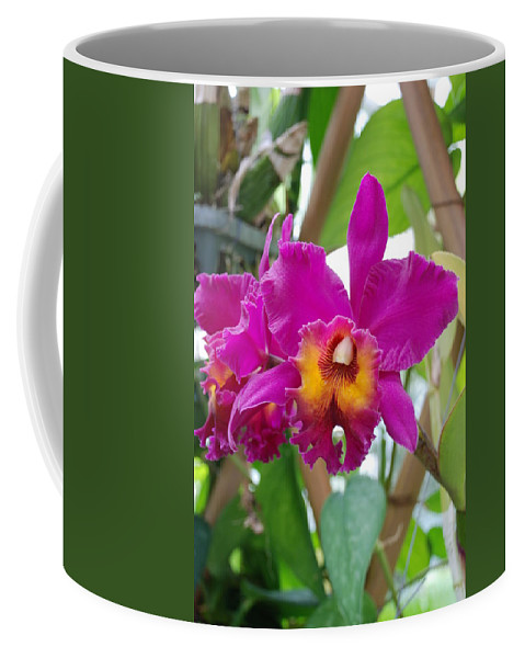 Macro Coffee Mug featuring the photograph Pinkishyellow Orchid by Rob Hans