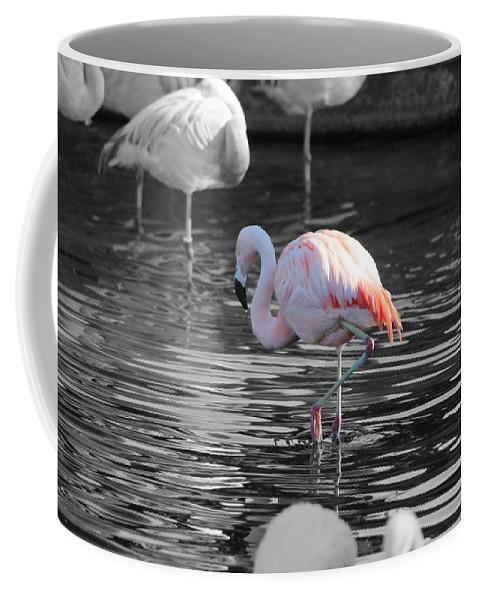 Palm Desert California Coffee Mug featuring the photograph Pinky by Colleen Cornelius