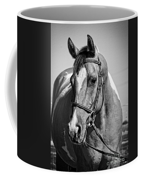 Horse Coffee Mug featuring the photograph Pinto Pony Portrait Black And White by Jim And Emily Bush