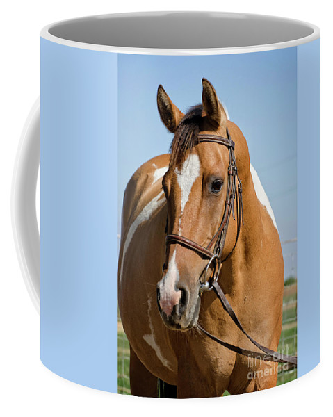Horse Coffee Mug featuring the photograph Pinto Pony Portrait by Jim And Emily Bush