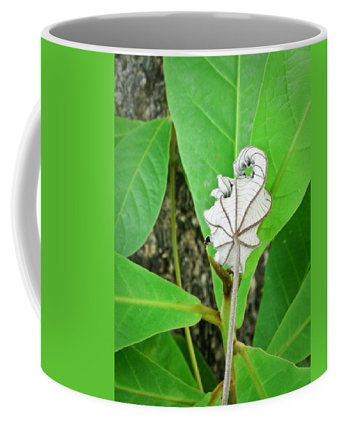 Plant Coffee Mug featuring the photograph Plant Artwork by Douglas Barnett