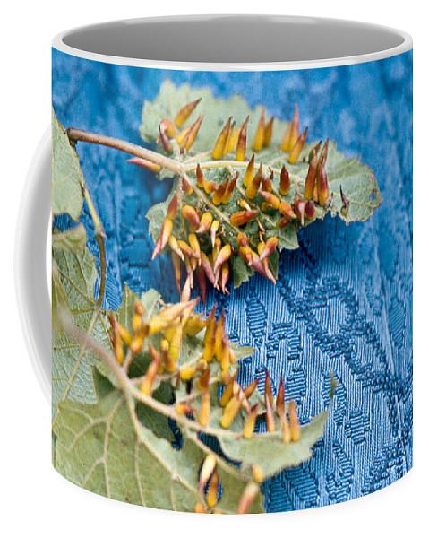 Plant Coffee Mug featuring the photograph Plant Galls by Douglas Barnett