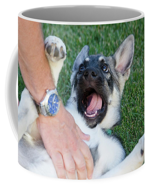 Balto Coffee Mug featuring the photograph Play by Sandra Parlow