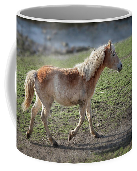 Horse Coffee Mug featuring the photograph Playtime Is Over 2534 by Karen Celella