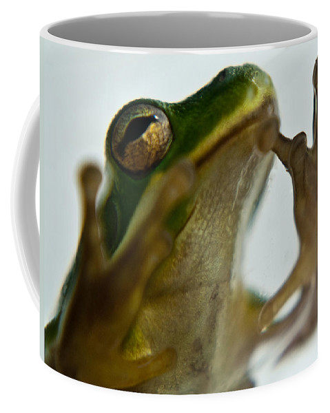 Frog Coffee Mug featuring the photograph Please Not In A Frogs Eye by Douglas Barnett