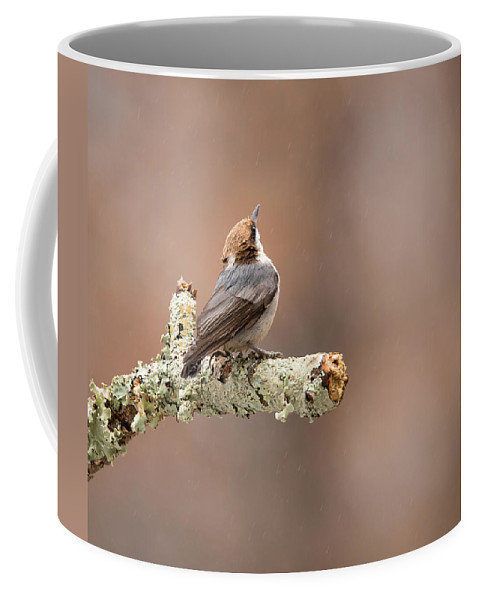Sitta Pusilla Coffee Mug featuring the photograph Please Stop The Rain - Brown-headed Nuthatch by Christy Cox