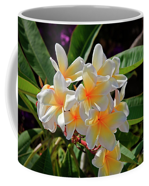 Plumeria Coffee Mug featuring the photograph Plumeria Flowers by John Stephens