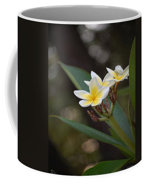 Plumeria Coffee Mug featuring the photograph Plumeria II by Robert Meanor