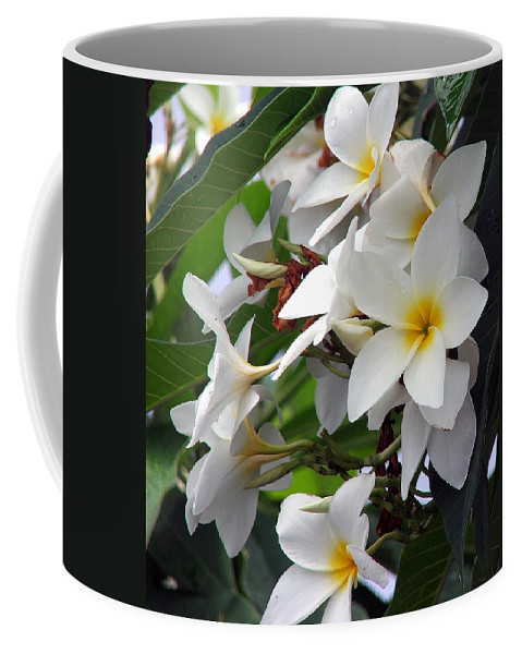 Flower Coffee Mug featuring the photograph Plumeria by Robert Meanor