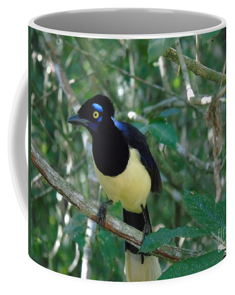 Plush-crested Jay Coffee Mug featuring the photograph Plush-crested Jay  Cyanocorax Chrysops by Silvana Miroslava Albano