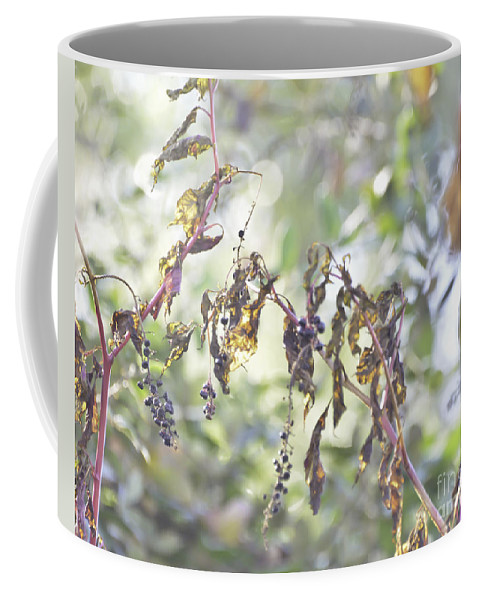 Pokeberry Coffee Mug featuring the photograph Pokeberry Light by Kerri Farley