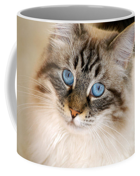 Clay Coffee Mug featuring the photograph Polly by Clayton Bruster