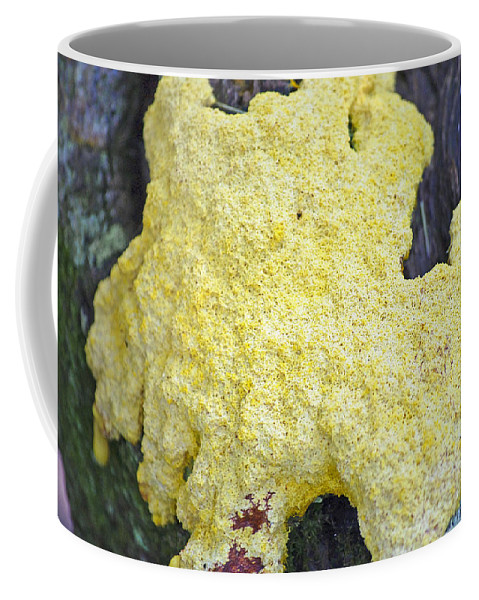 Slime Mold Coffee Mug featuring the photograph Polymyxa Slime Mold by Kenneth Albin