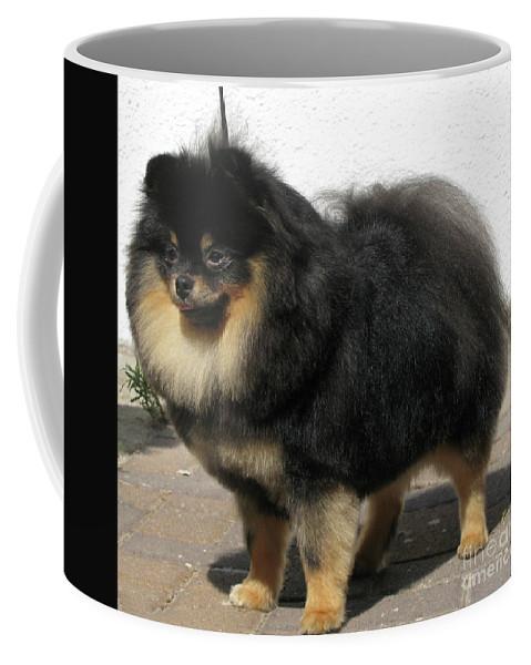 Pomeranian Coffee Mug featuring the photograph Pomeranian by Amir Paz