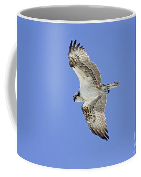 Coffee Mug featuring the photograph Ponce Osprey 1 by Deborah Benoit