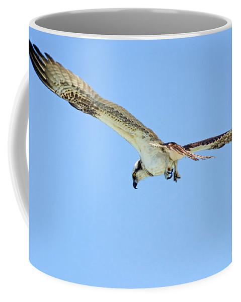 Osprey Coffee Mug featuring the photograph Ponce Osprey 3 by Deborah Benoit