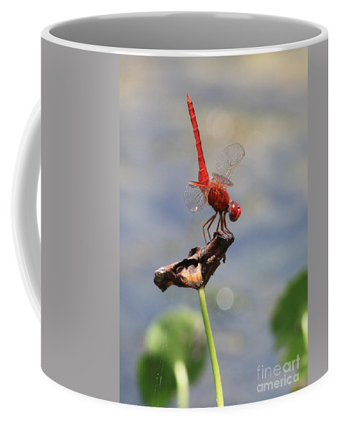 Dragonflies Coffee Mug featuring the photograph Pond Ballerina by Carol Groenen