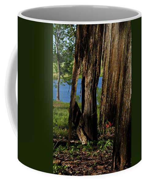 Landscape Coffee Mug featuring the photograph Pond Fragments by Rachel Christine Nowicki