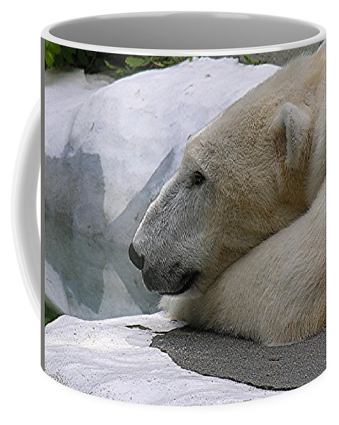 Pola Coffee Mug featuring the photograph Pondering Pola by Diane Greco-Lesser
