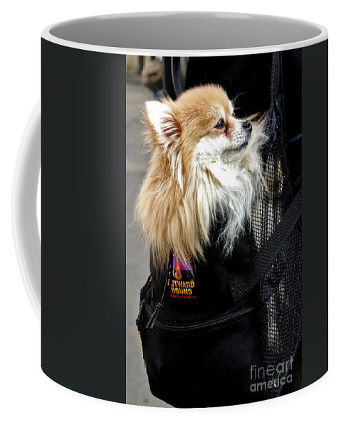Dog Coffee Mug featuring the photograph Pooch In The Pouch by Madeline Ellis