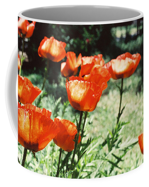 Flowers Coffee Mug featuring the photograph Poppies by Ric Bascobert