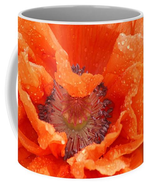 Orange Coffee Mug featuring the photograph Poppy by Heather Coen