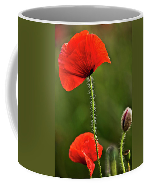 Nature Coffee Mug featuring the photograph Poppy Image by Heiko Koehrer-Wagner
