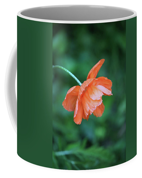 Nature Coffee Mug featuring the photograph Poppy by Theresa Campbell