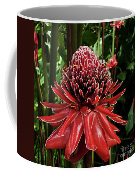 Etlingera Elatior Coffee Mug featuring the photograph Porcelain Rose by Heiko Koehrer-Wagner