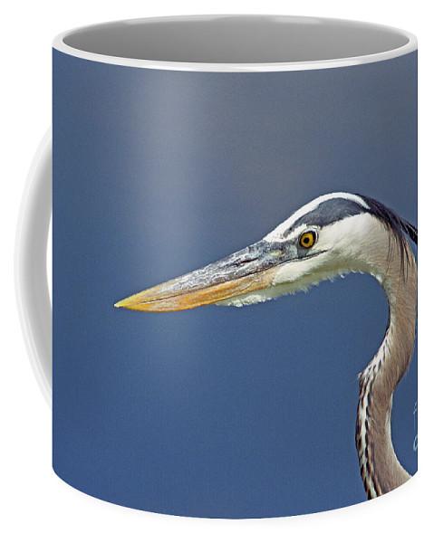 Bird Coffee Mug featuring the photograph Portrait Of A Great Blue Heron by John Harmon