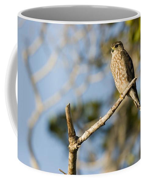 One Animal Coffee Mug featuring the photograph Portrait Of A Merlin Falco Columbarius by Tim Laman
