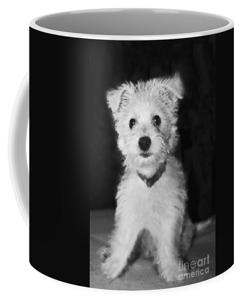 White Coffee Mug featuring the photograph Portrait Of A Puppy In Black And White by Terri Waters