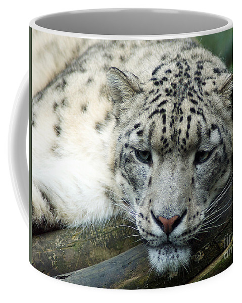 Leopard Coffee Mug featuring the photograph Portrait Of A Snow Leopard by Toula Mavridou-Messer