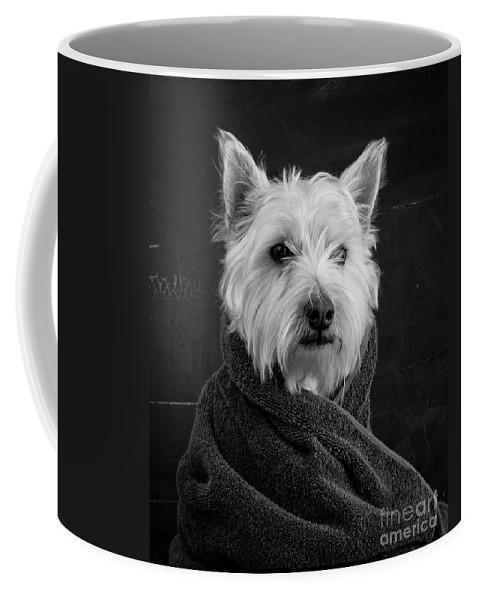 Portrait Of A Westie Dog Coffee Mug featuring the photograph Portrait of a Westie Dog by Edward Fielding