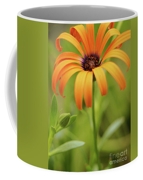 Flowers Coffee Mug featuring the photograph Portrait Of Orange Symphony by Dorothy Lee