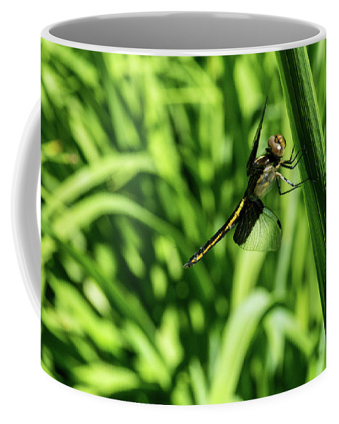 Odanata Coffee Mug featuring the photograph Posing Dragonfly 2 by Douglas Barnett