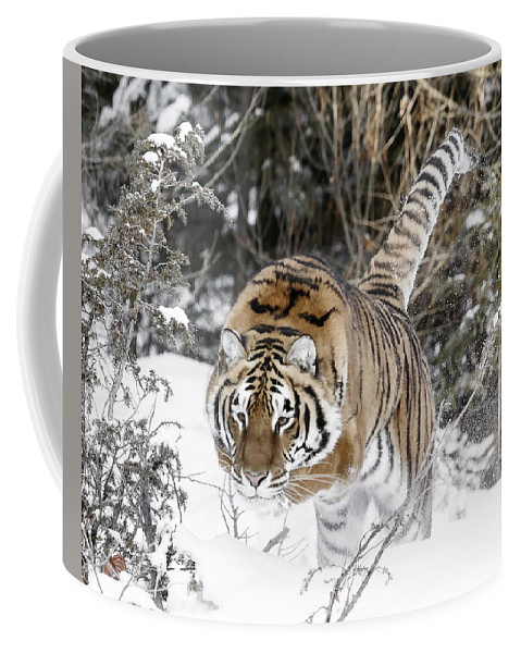 Pounced Coffee Mug featuring the photograph Pounced by Wes and Dotty Weber